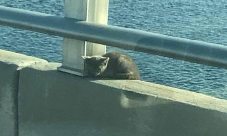 Kitten saved from ledge on Roosevelt Bridge