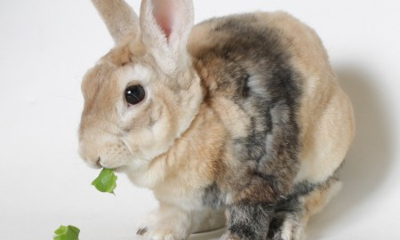 Oliver Twist HSTC Pet of the Week April 27