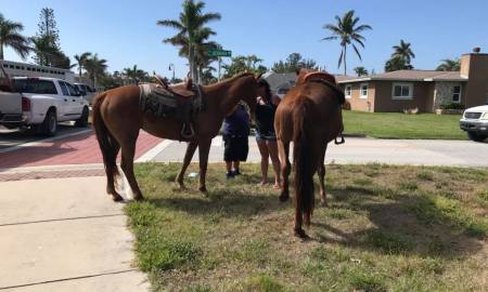 1 horse dead, one injured in incident on Hutchinson Island