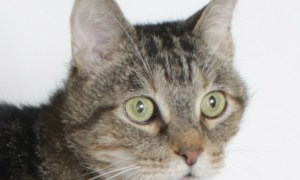 Evan: June 22 Pet of the Week