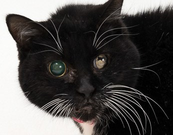 July 20 HSTC Pet of the Week: Coraline