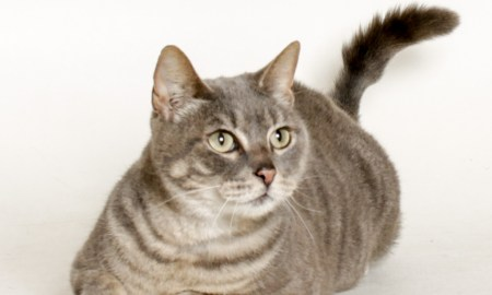 August 10 HSTC Pet of the Week: Little Henry