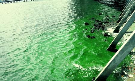 New study shows Alzheimer's-like brain disease in dead Florida dolphins