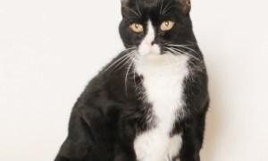 Adopt Jinx! Rescue Pet of the week!
