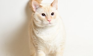 Adopt! Mr White! Rescue Pet