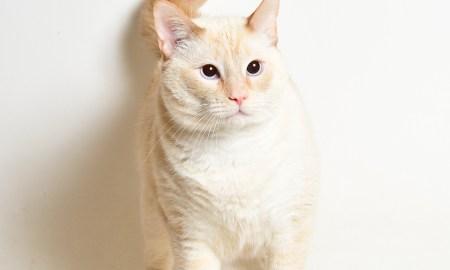 Adopt! Mr White! Rescue Pet