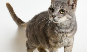 Adopt Edith! Rescue Pet of the week May 17