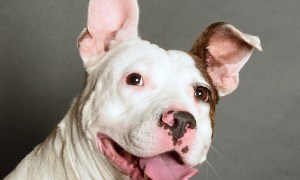 Adopt Polly! Pet of the Week!