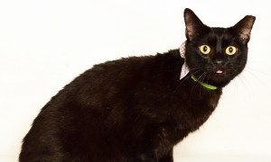 Adopt OBJ! Pet of the week!