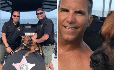 MCSO rescue dog from ocean near Hobe Sound