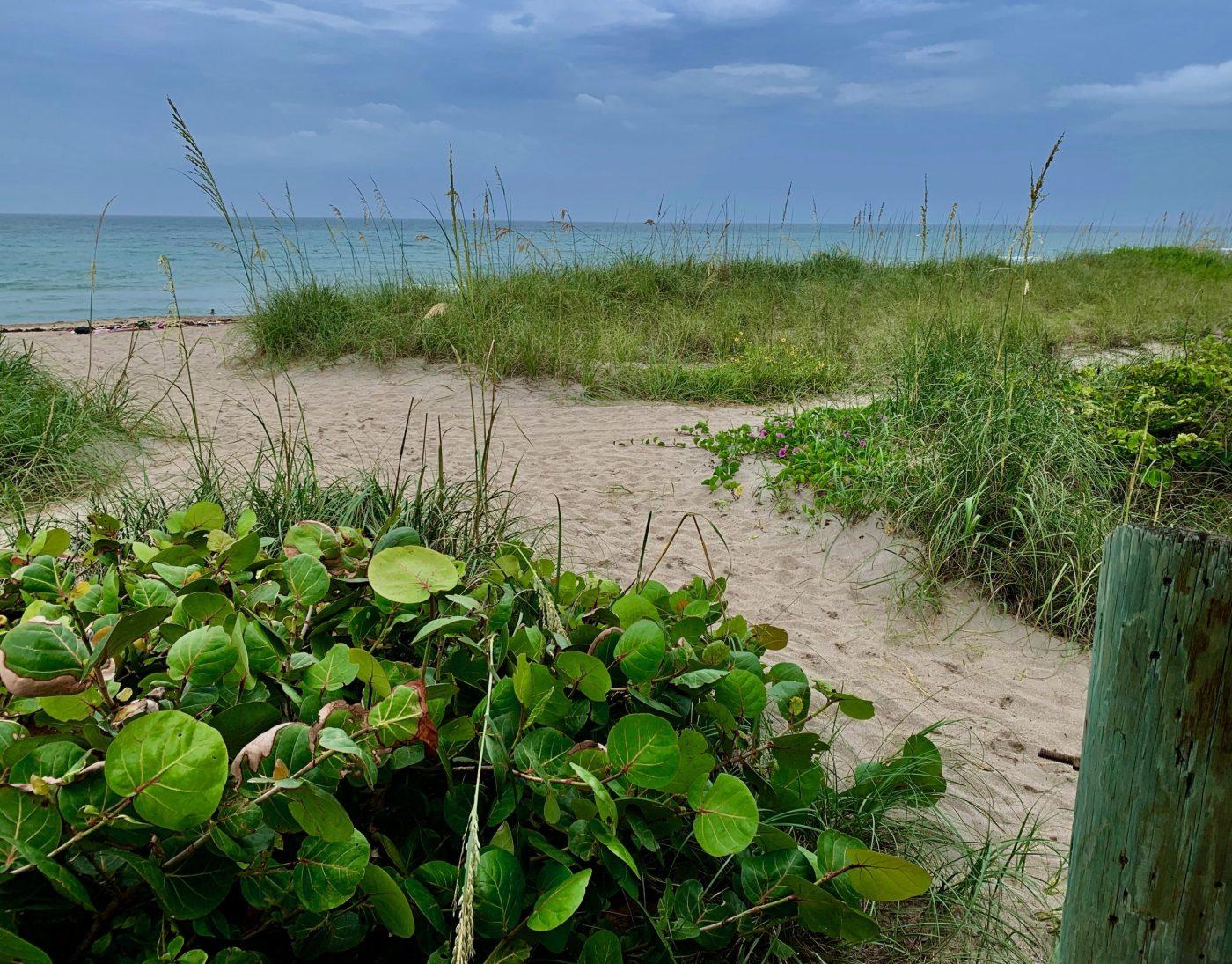 Jensen Beach/ Sea Turtle Beach