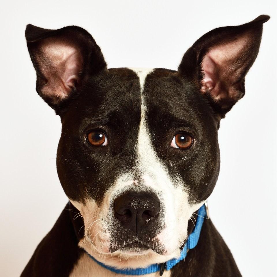Adopt Pepper! Pet