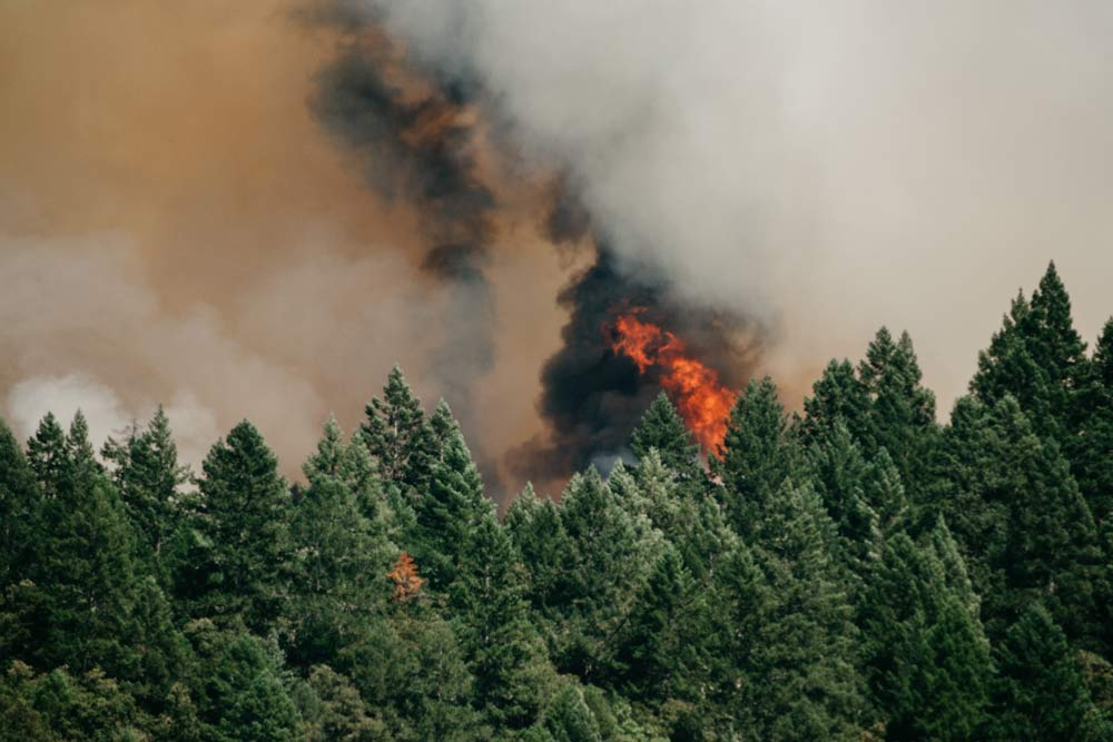 Wildfire Smoke & Asthma: A Survival Guide