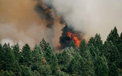 How To Survive Wildfire Smoke And Asthma: 7 Powerful Strategies