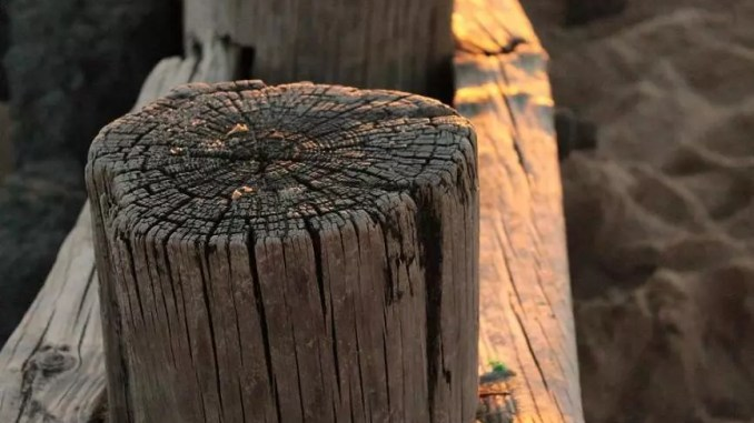 A picture of weathered wood by Sean Keenan