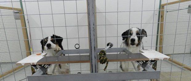 dogs by Mylène Quervel-ChaumetteVetmeduni Vienna 620