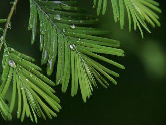 subtropical rainfall