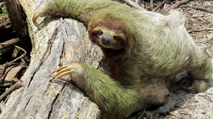 sloth, inactivity