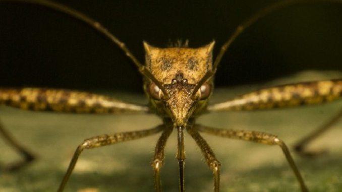manipulate mosquitoes