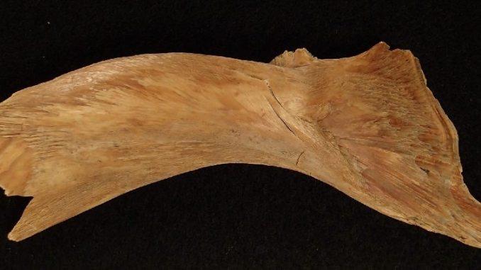 Viking cod bones
