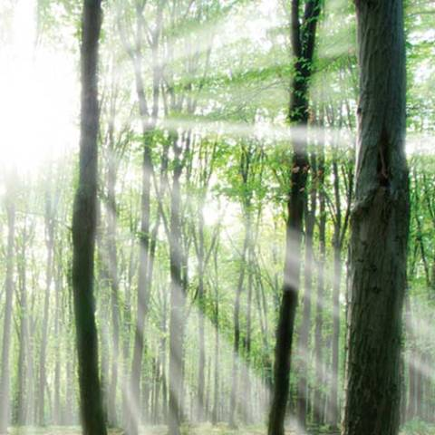 Light through trees