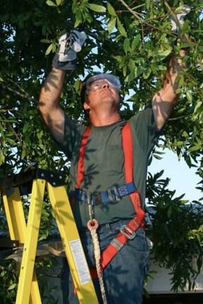 tree-surgeon-dorset