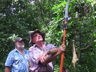 Bill Rae demonstrates summer pruning