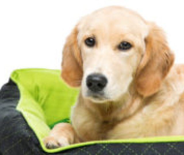 Best Dog Beds For Large Dogs In