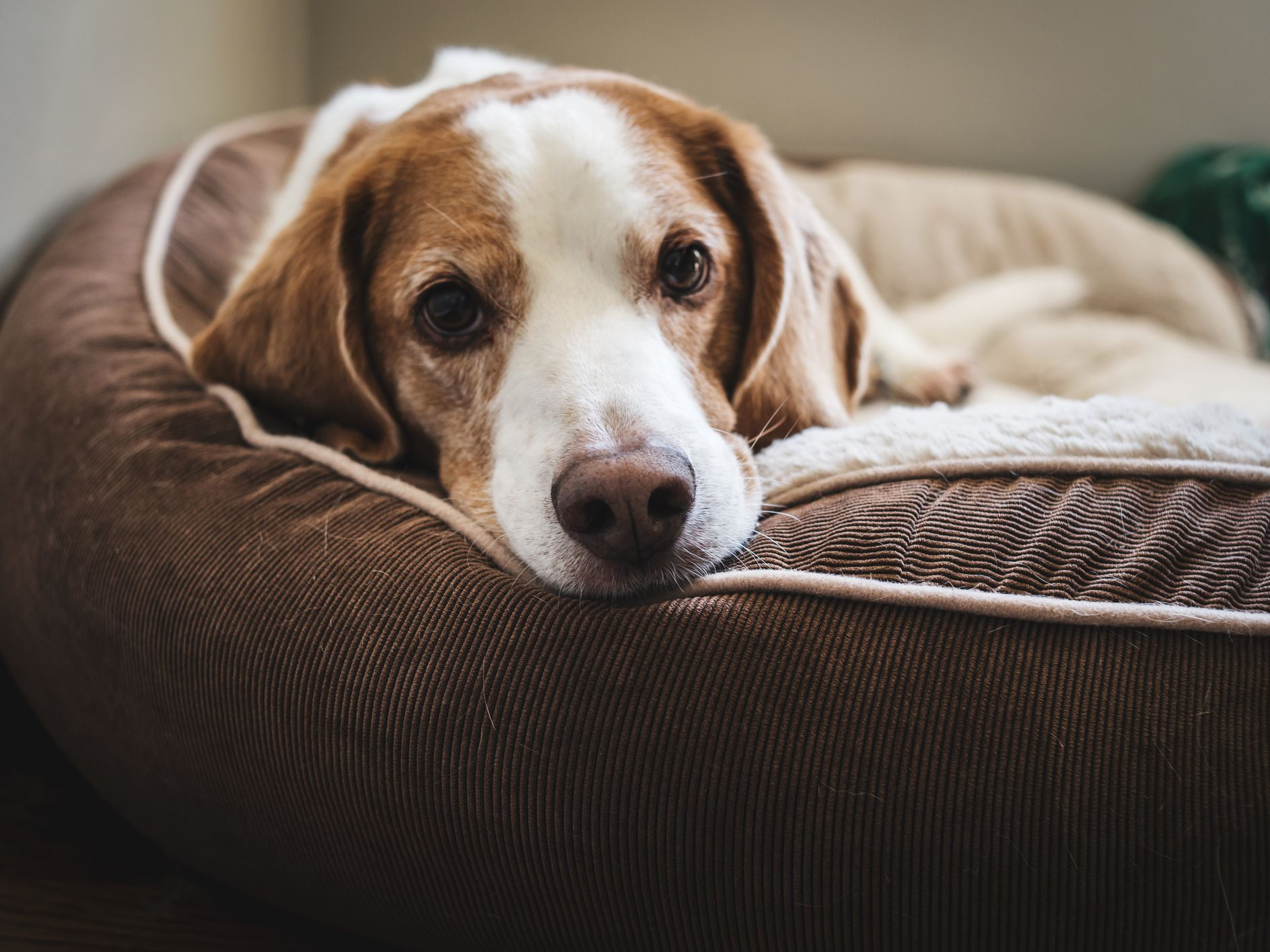 7 Planet Friendly Dog Beds For Comfy Canines
