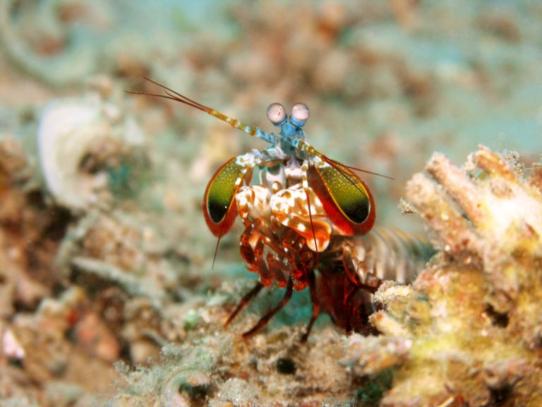 8 Unexpectedly Beautiful Sea Creatures