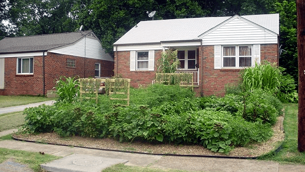 Stay At Home Dad Wins Right To Front Yard Vegetable Garden