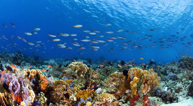 an underwater view of a coral reef with a school of fish swimming above.