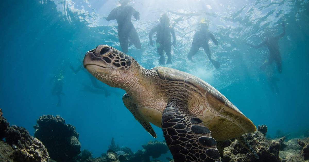 Cairns Eco Reef Cruise by Sota Yamaguchi
