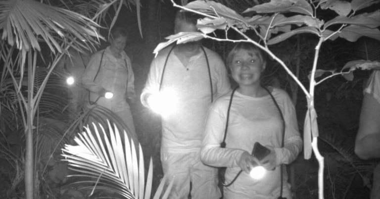 Daintree night walkers on tour