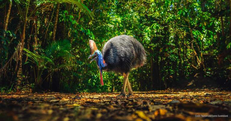 Daintree Self Drive Adventure_FEATURE_Tourism and Events Queensland
