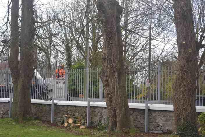 tree services cork