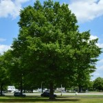 Valuing Trees