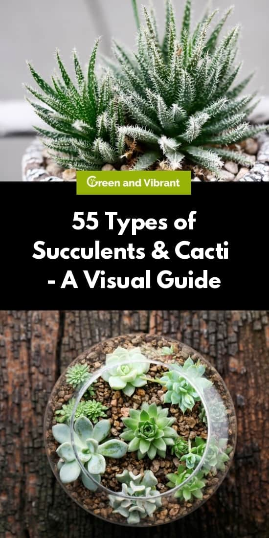 55 Types Of Succulents Cacti Growing Tips And Photos Trees Com