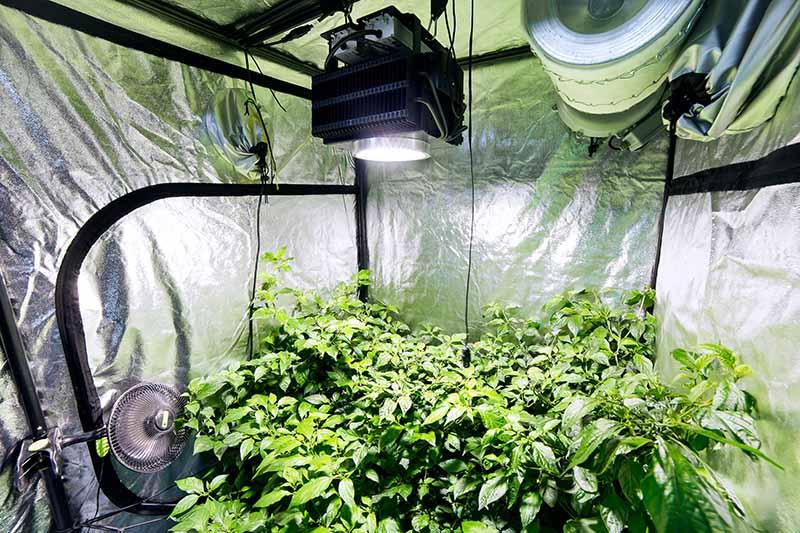 grow room ventilation systems a