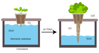 The Kratky Method - Grow Food The Passive Hydroponic Way (Step by Step  Guide) | Trees.com