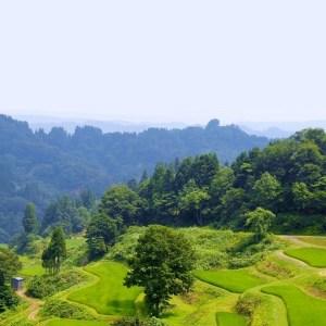 Trees_Japon_Japan