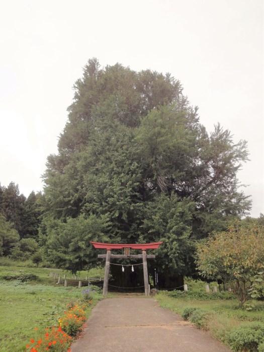 iiyama-godo-ichou-torii