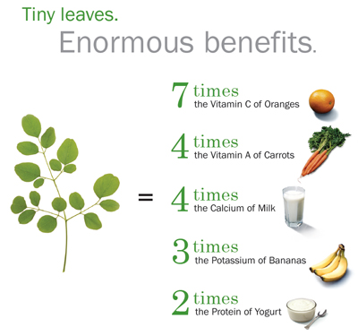 Moringa Diagram: Tiny leaves. Enourmous benefits.
