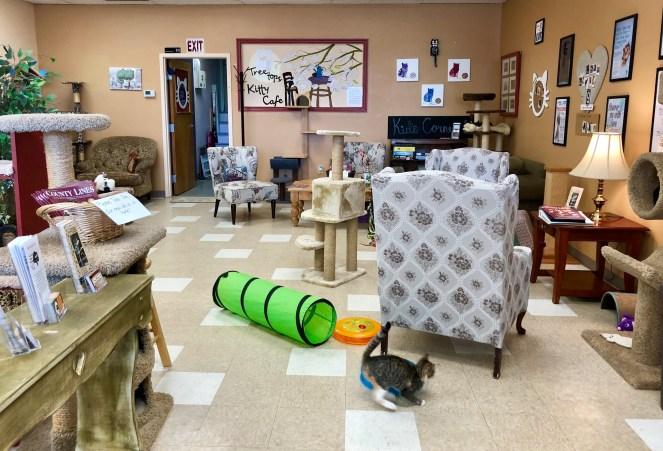 Treetops Kitty Café – Cat Adoption Center & Pet Boutique