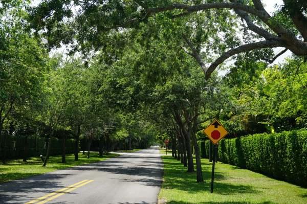 Quercus Virginiana (Southern live oak)