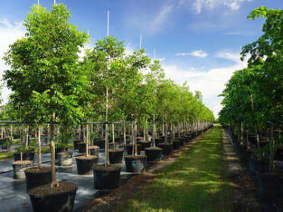 Treeworld Wholesale Inventory Management & Classification Of Trees