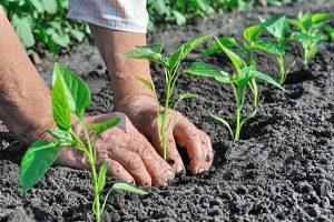 Agricoltura Biodinamica: in Italia grandi margini di crescita per il settore