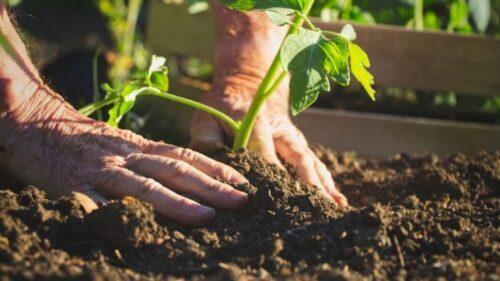 Agricoltura biodinamica cresce, raddoppio aziende in 10 anni