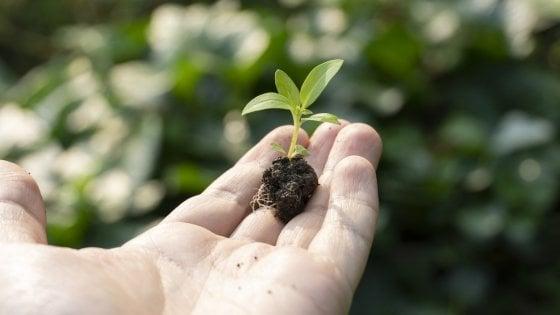 Agricoltura biodinamica italiana: il mercato estero cresce del 14% nel 2020