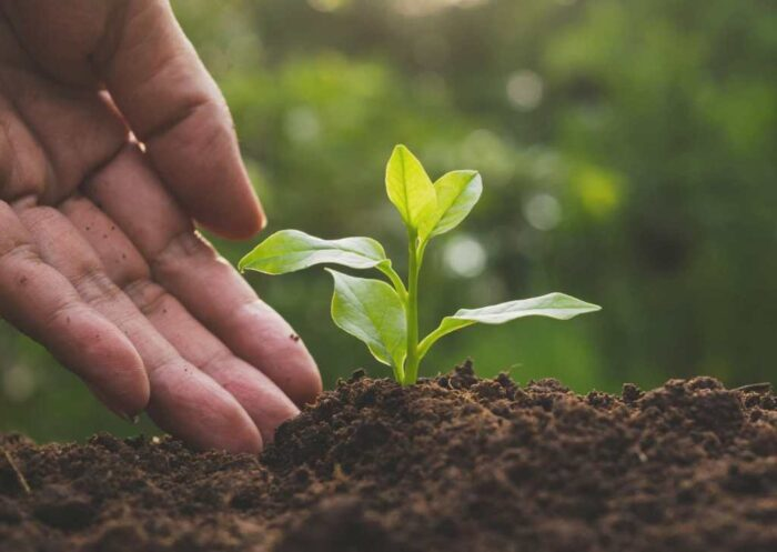 In 2020 cresce export agricoltura italiana biodinamica: +14%